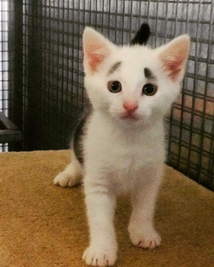 Ingrid S Haven Christmas New Year Appeal For The Kittens By