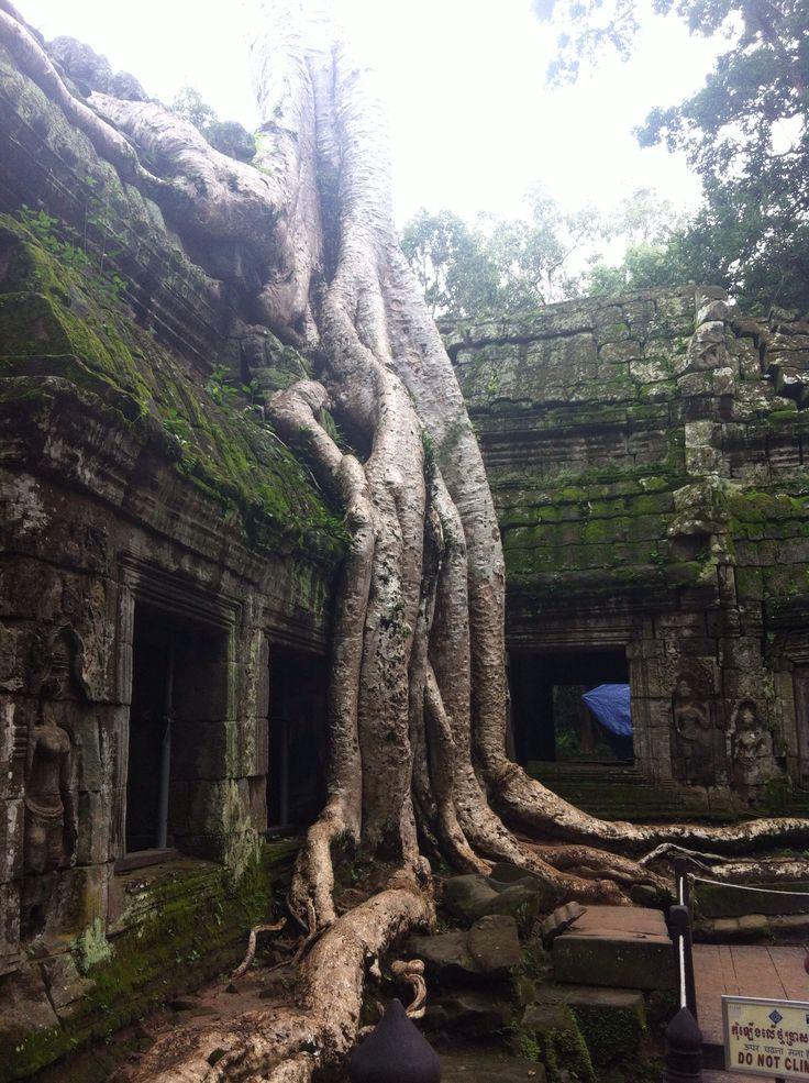 Ta Prohm - Angkor Wat - Cambodia