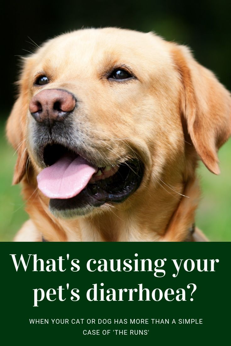 Almost Every Dog Or Cat Will Suffer From Diarrhoea At Some Point