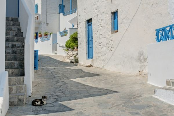 Cat in the village of Ikaria island, Greece