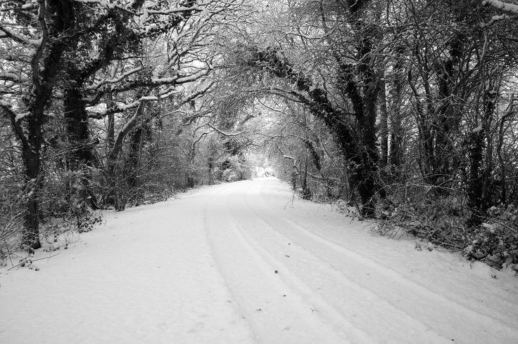 Snowy lane. Sussex, England