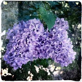 Violeta, color mágico!