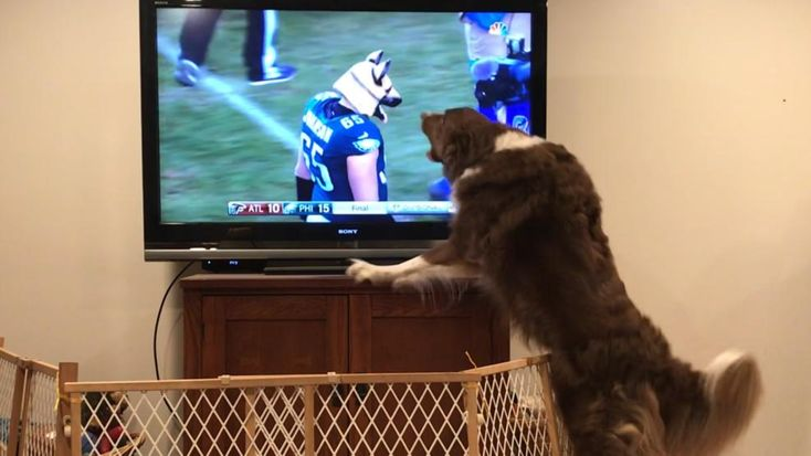 #FlyEaglesFly Your Eagles Fan Photos - NBC 10 Philadelphia
