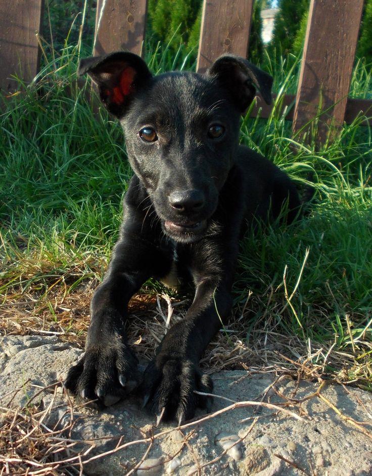 szczeniaki w schronisku! #szczeniak #puppy #psy #dogs #schronisko #shelter