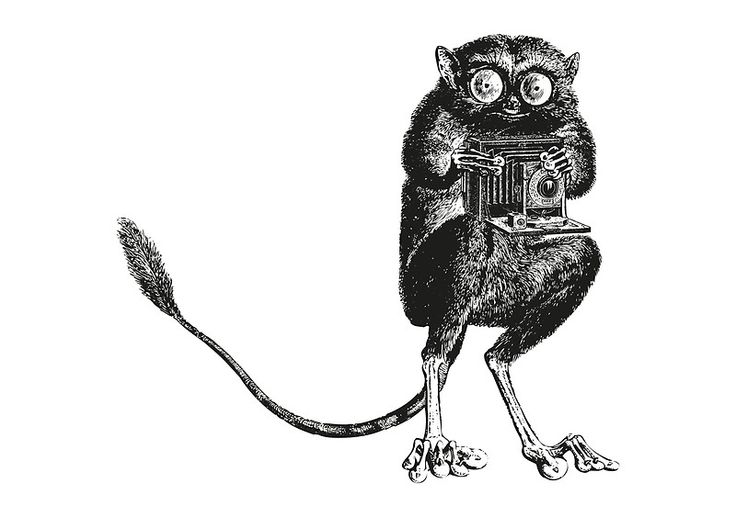 Say Cheese! - Tarsier with Vintage Camera