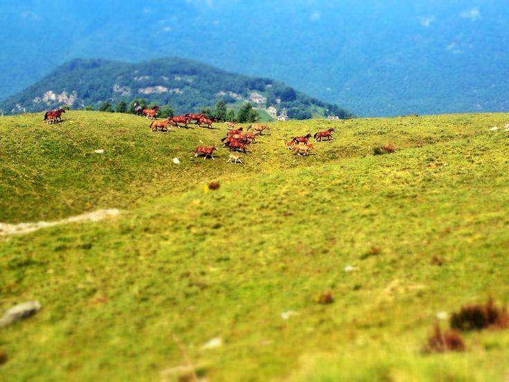 Monte Bigorio (Ticino, Switzerland) Photo: Luca Manetti #trailrunning #Trailburning