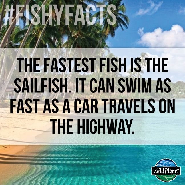 76 best images about fishy facts on pinterest facts for Interesting facts about fish
