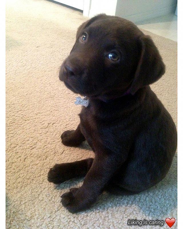 Dog Puppy Cute Cutepuppy Cutedog Cuteanimals Hundebaby