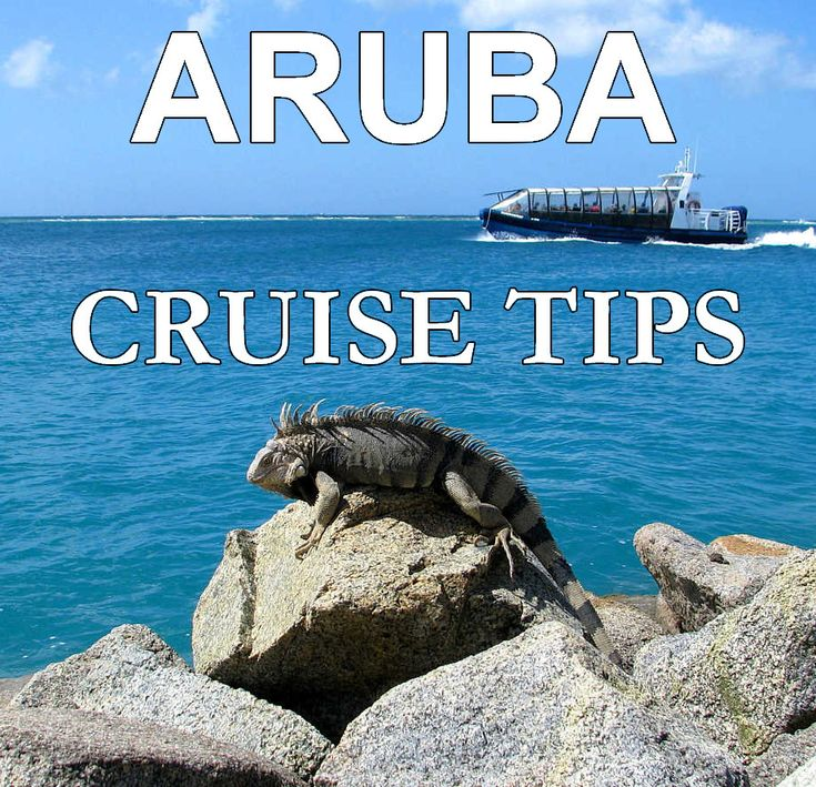 Aruba's cruise port has plenty of fun things to do. Even the iguanas have a blast ...