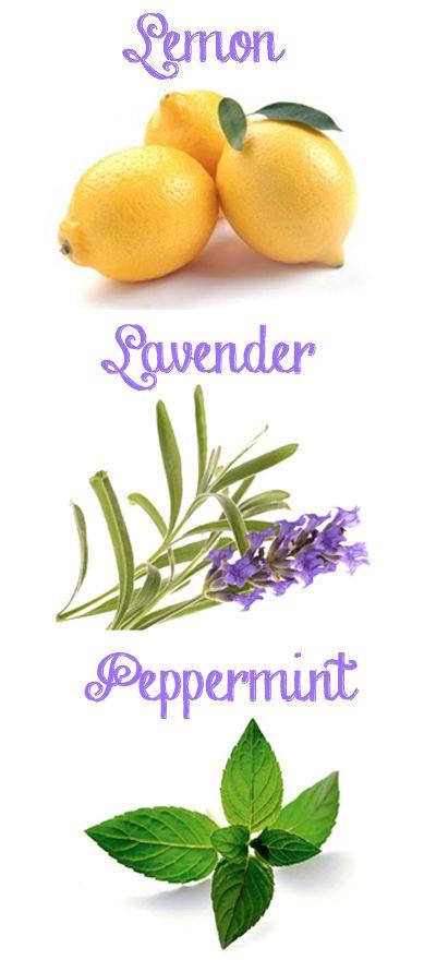 Help for Allergy Sufferers! Lemon, Lavender, & Peppermint - The Natural Antihistamine!