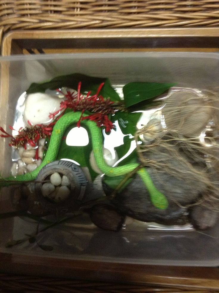 My provocation for play today is all about snakes as we saw one in our Bushland backyard and my grandson is interested in what they do.this provocation will help him resell a story about the snake.