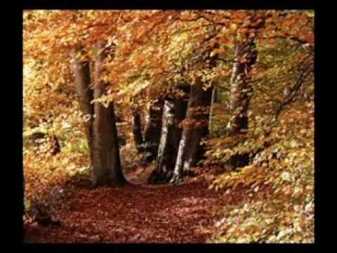 PLOAIE de FRUNZE [Rain of leaf]--Toamna [Tudor Gheorghe]