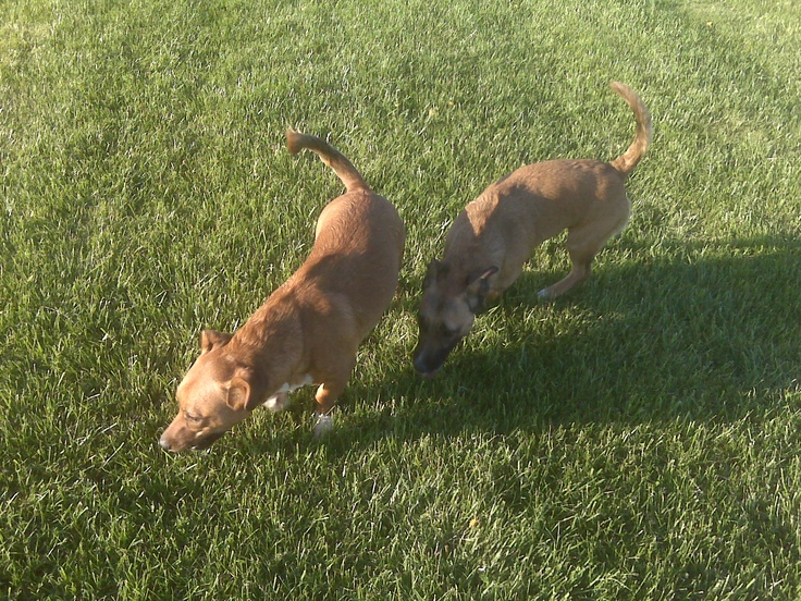 Tanker and Panzer, only 6 months old.  My little babies. :-)