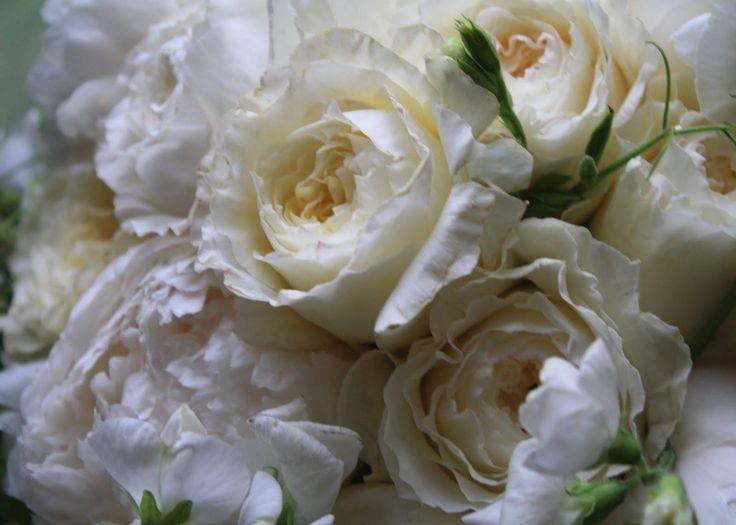 129 best white flowers images on pinterest | white flowers