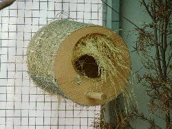 lots of finch nesting ideasFinch Nests, House Birds, Gardens Aviary, Nests Receptacl, Feathers Families, Nests Ideas, Finch Care, Birds Diy