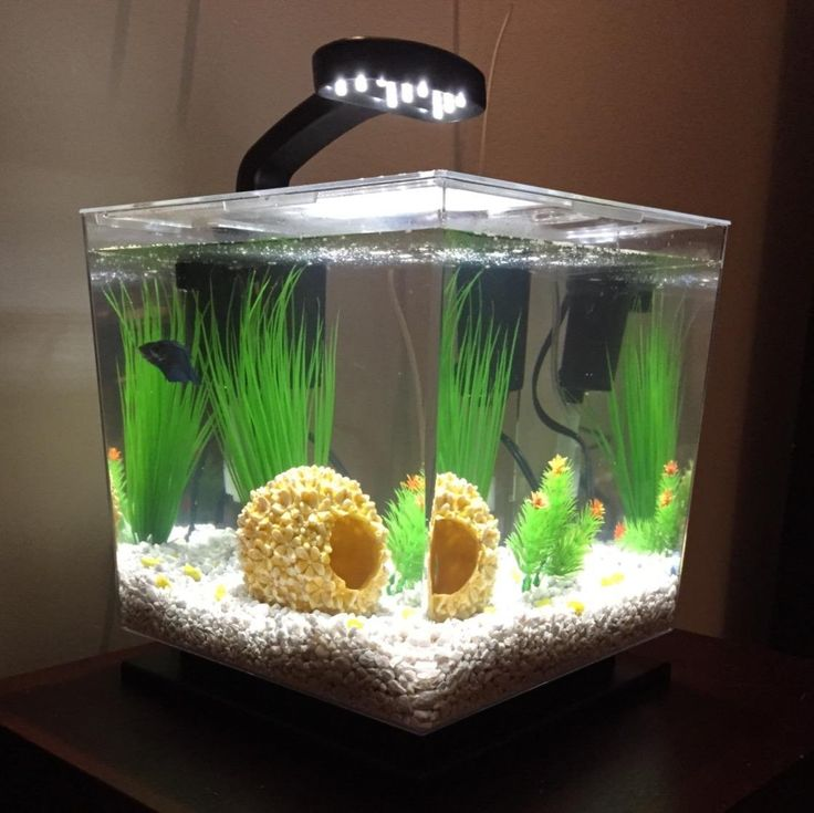 Amazonsmile tetra 29095 cube aquarium kit 3gallon