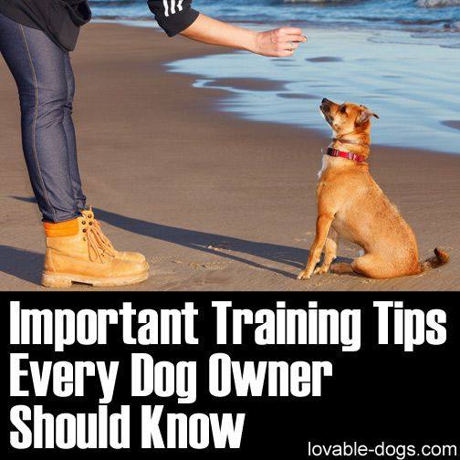 Please Share This Page: Photo © jarcosa – fotolia.com This video taken from the Queen Latifah show is very short but has a very strong message. Cesar Millan samples the important tips that every dog owner should know. Of course, Cesar is a veteran in dog training and probably the most popular trainer in the …