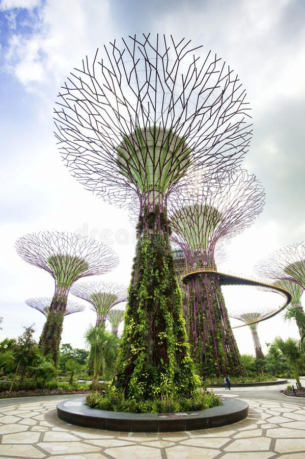 Gardens By The Bay Singapore The New Supertree An Environmentally Friendly Tre Aff Su Gardens By The Bay Vegetable Garden Design Butterfly Garden Design