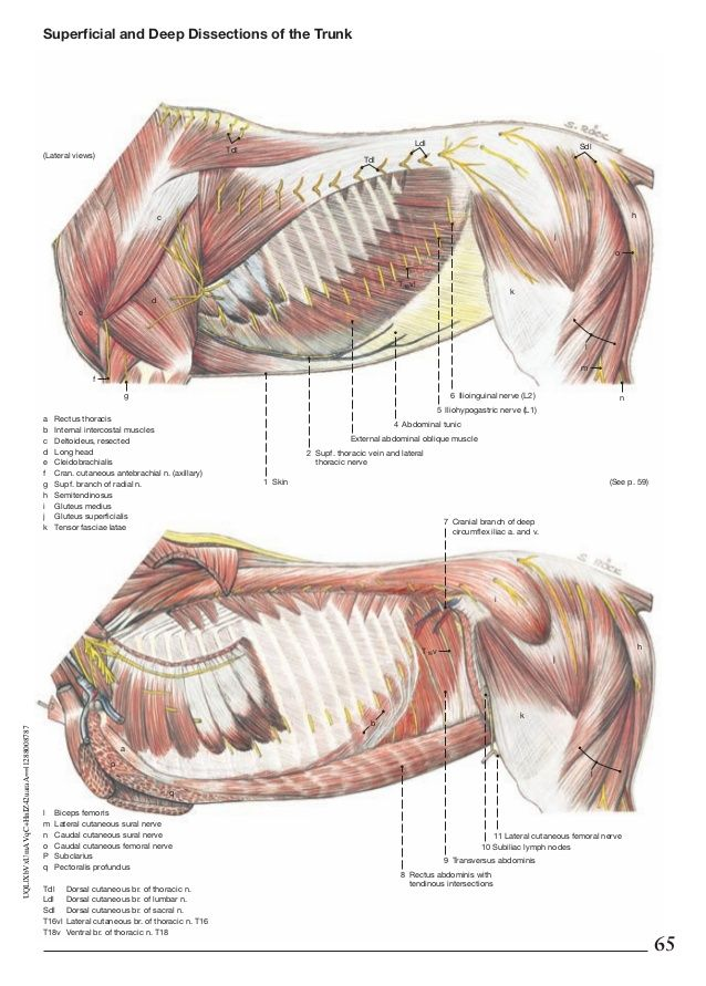211 besten Horse Anatomy Bilder auf Pinterest | Tieranatomie, Tiere ...