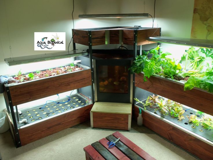 Indoor aquaponics5913 7 aqua botanical growbox for Fish tank hydroponic garden