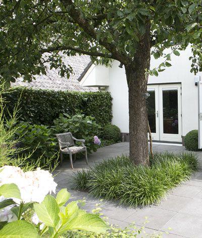 Kleine tuin appelboom , fotografie: Modeste Herwig