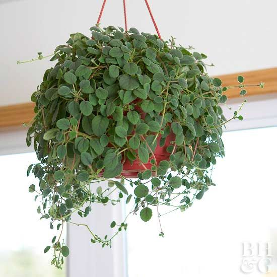 <p>When your animals are your family, keeping them safe is a top priority. One way to watch over them is to choose pet-friendly houseplants for your home. Nontoxic plants are a great way to add color and texture to your decor while keeping your furry friends safe. We've rounded up a list of indoor plants safe for cats and dogs.</p>