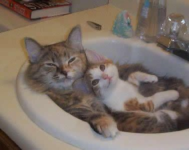 : Cats, Snuggles, Funny Cat, Bathroom Sinks, Kittens, Hot Tubs, Kitty, Animal, Bath Time