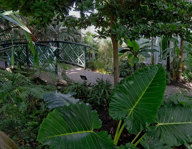 Tropical Greenhouse, Frederik Meijer Gardens, Grand Rapids, MI ...