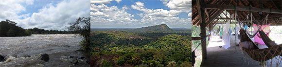 Raleighvallen – Voltzberg, In dit reservaat komen alle acht apensoorten voor die Suriname telt. De Zuid-Amerikaanse slingeraap, de spinaap, is er veelvuldig te zien tijdens de tocht naar de Voltsberg. Reeds enkele jaren is hier een internationaal wetenschappelijk onderzoek bezig naar enkele apensoorten.