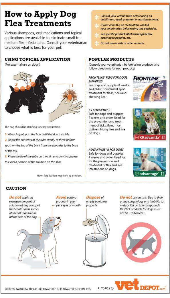 How To Safely And Effectively Apply Dog Flea Treatments Infographic Home Remedy For Heartworms In Dogs Safest Heart Dog Flea Treatment Flea Treatment Fleas
