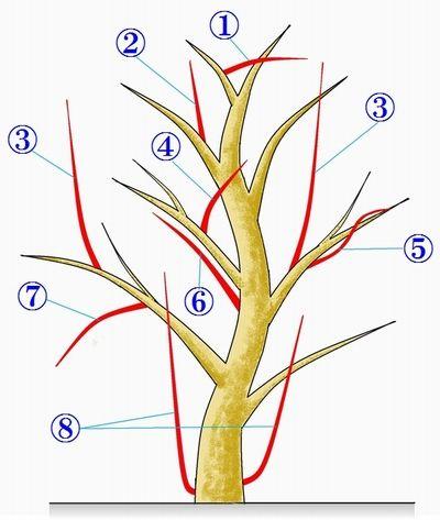 お庭手入れ/植木剪定~枚方の植木屋【造園社みやび】-庭木お手入れ