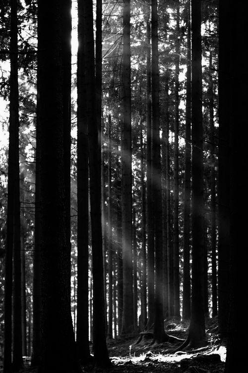 VARNUAK | via Tumblr trees,  black and white,  varnuak