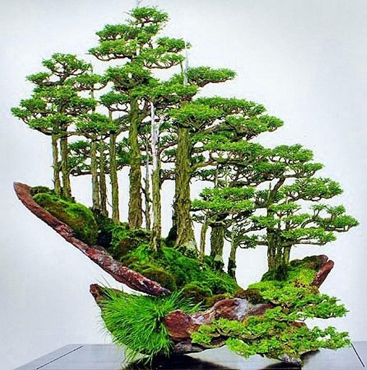 Bonsai forest monte