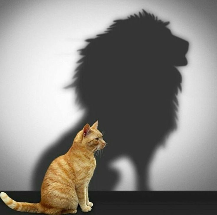 How he really feels. Cat lion