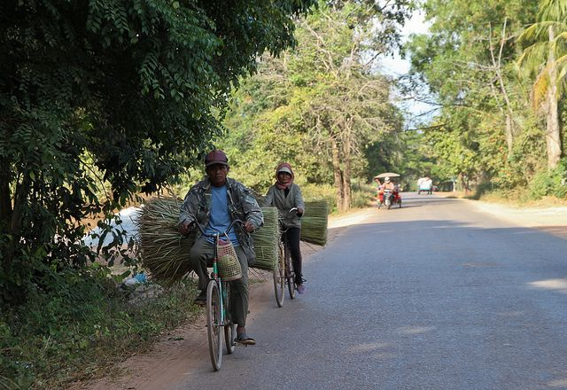 Farmers bringing in the harvest by bicycle near Siem Reap, Cambodia, january 2013 (by Freek Nijenhuis)