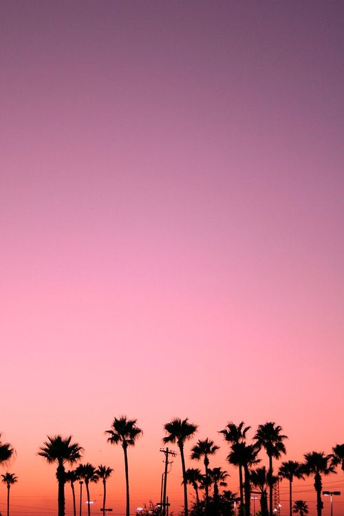 Palm Trees And Pink Skies