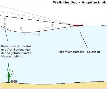 """Walk-the-Dog Angeltechnik zum Angeln auf Rapfen, Barsch und Hecht, Tipps und Infos zur Angelmethode """"Walking-the-Dog"""""""