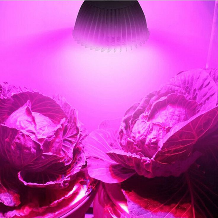 Full spectrum Grow light E27 LED growing plants Grow lamp ,lampara led cultivo ,led lamp for flower plant Hydroponic grow P20 #Affiliate
