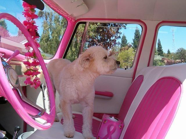 Jak wyrobić paszport dla psa lub kota na czas podróży? #paszport #pies #kot #zwierzęta #zwierzaki #podróże