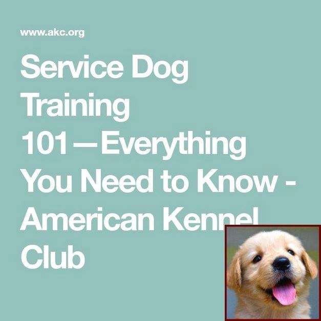 Dog Behavior Running In Circles And Clicker Training Dogs Books