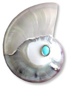 Nautilus Shell Pin with Turquoise Cabochon set in 14 K gold.