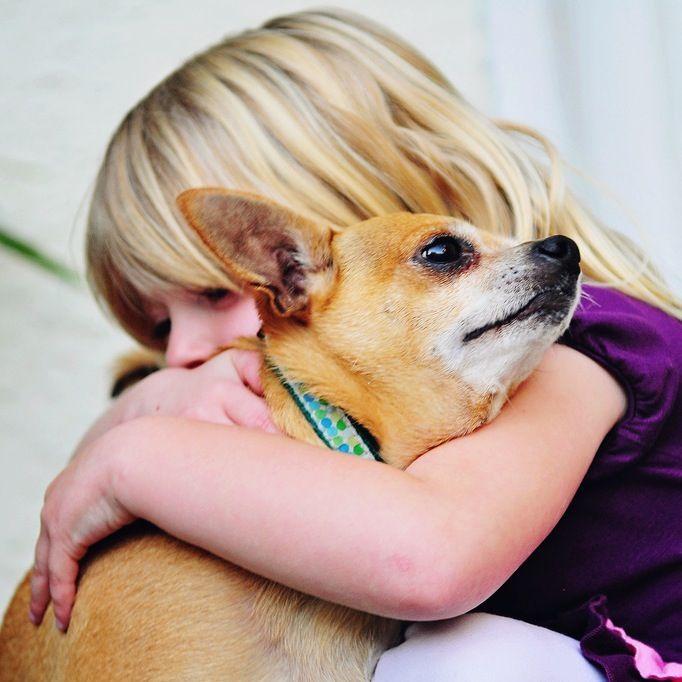 Resultado de imagen para chihuahua and owner hug