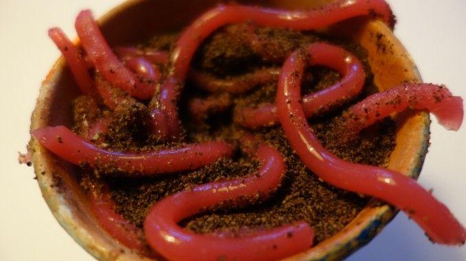 Aus roter Götterspeise lassen sich mit einem zusätzlichen Päckchen Gelatine ganz echt wirkende Regenwürmer selber machen.