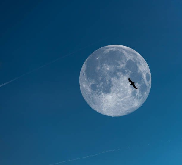 the freedom of a bird flying to the full moon