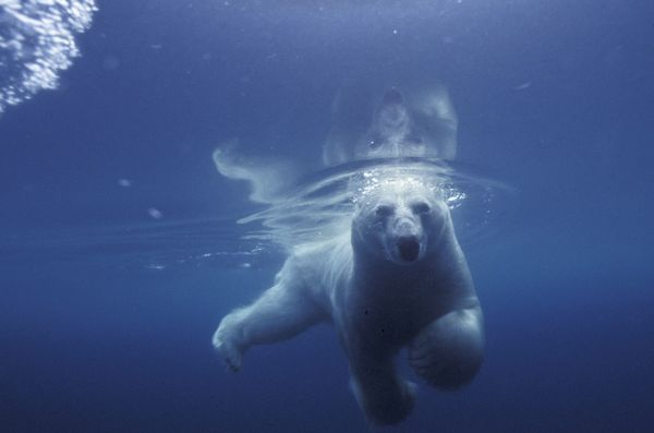 In Honor of International Polar Bear Day, Spectacular Pictures of a Threatened Species