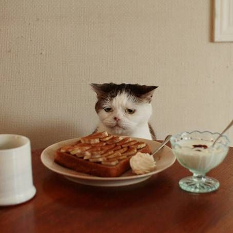 Kitteh is VERY displeased with your food offering.