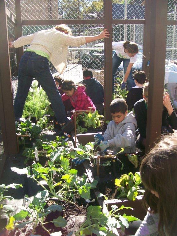 Lovely School Garden