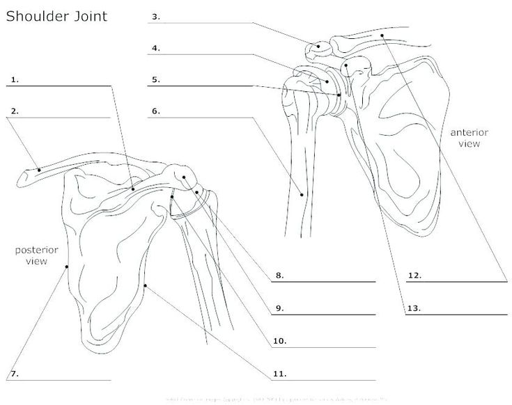 Image result for anatomy labeling worksheets | Skull and ...