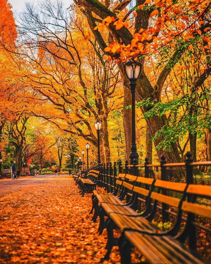 Central Park Nyc Fall Favorites Full Time Explorer Nyc New York City Usa United States America Tr Autumn Scenery Autumn In New York Central Park Nyc