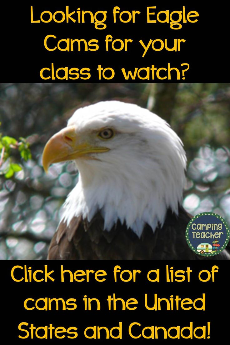 Looking for eagle cams for your class to watch? Click here for a list of cams in the United States and Canada!